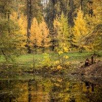 Золотая осень :: Elena Ignatova