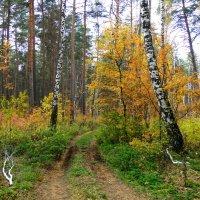 Осенний лес :: Елена Шемякина
