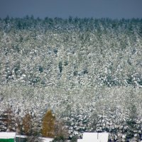 Снежный лес :: Nastya. S