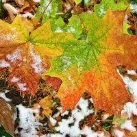 Краски осени под снегом :: Лидия (naum.lidiya)