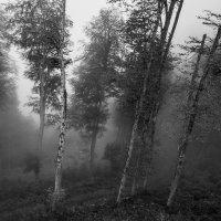 природа :: Анна Шишкина