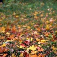 Осень под ногами.. :: Юрий Анипов
