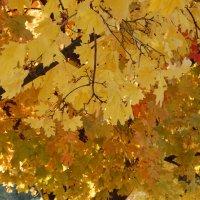 Вот и покрыла осень листья сочными цветами :: Ann