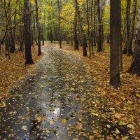 Вариации на тему Золотой Осени :: Андрей Лукьянов