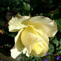 Осенняя красотка :: svetlanavoskresenskaia