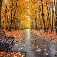 Осень в парке :: Денис Масленников