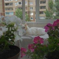 Лето на лоджии :: Владимир Ростовский