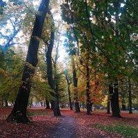 В осеннем парке :: Дмитрий Лебедихин