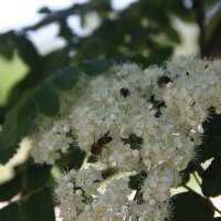 Пчёлки :: никита кичапин
