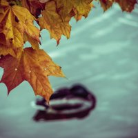 тихая осень :: Naty ...