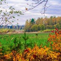 Осень в октябре :: Андрей Куприянов