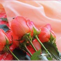 Акварельные розы :: Лидия (naum.lidiya)