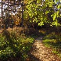 Продолжение Золотой Осени :: Андрей Лукьянов