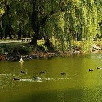 Парковый пруд :: Александр Бурилов