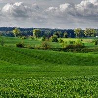 Сельский пейзаж :: Алексей Видов