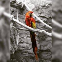 Птичка :: PooH63 -