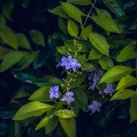 6546546 :: A.M. Photo