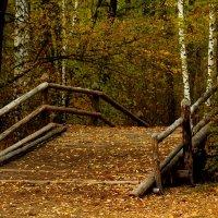 Осень! :: Наташа Шамаева