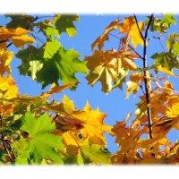 Осень :: Алла Захарова
