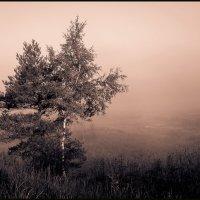 Утро у реки Дойбица. :: Юрий Савченко