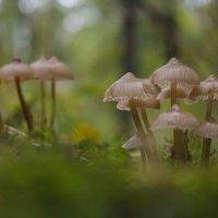осенние грибочки :: Юрий Ващенко