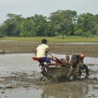 Шри Ланка. Тракторист рисовых полей. :: Елена Савчук
