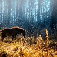 Осенняя прогулка 4 :: Дмитрий Соколов