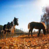 Осенняя прогулка 1 :: Дмитрий Соколов