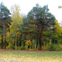 "Осень в парке ""Ботаника"". :: Борис Митрохин"