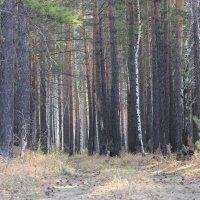 Лес осенью. :: Андрей