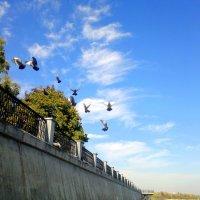 стая голубей :: Александр Прокудин