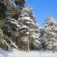 Рождественский лес :: Арина Зотова