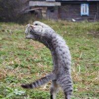 кошки мышки :: Седа Ковтун