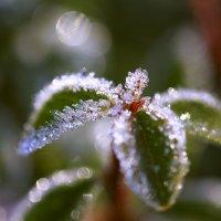 Осенние заморозки :: Татьяна