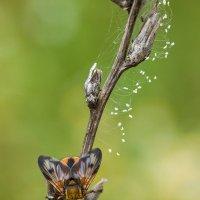 яркая муха. :: Андрей Ветров