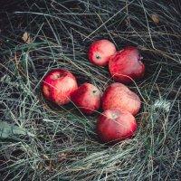 Яблоки на.....траве)) :: Надежда Овчинникова