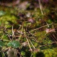 Удивительный лесной микромир :: Андрей Мешков