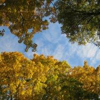...это о сень и не осень... :: novik Юрий Новиков