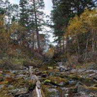 Бадукский лес ... :: Vadim77755 Коркин