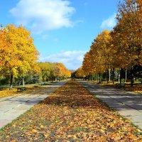 Осенняя аллея :: Nina Streapan