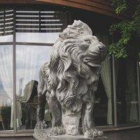 Питерский лев :: Павел Зюзин