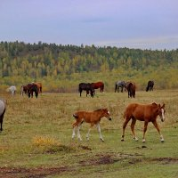 На полевых, лесных просторах. :: Наталья Юрова