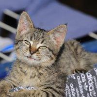 кошкина улыбка :: Alima Назарова