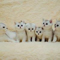 Фотографировала сегодня такую милую семью! :: Ирина Филин