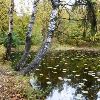 Шуваловский парк :: Елена Грошева