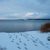 По первому снегу, вдвоём купаться теплее))) :: Владимир Звягин
