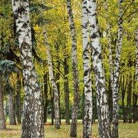 осенний парк :: Мария Климова