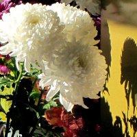 Цветы осени :: Александр Скамо
