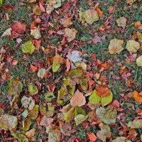 Осенний ковер (фрагмент) :: M Marikfoto