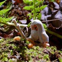 Сбор утренней росы с молодых грибов :: Олег Баламатюк